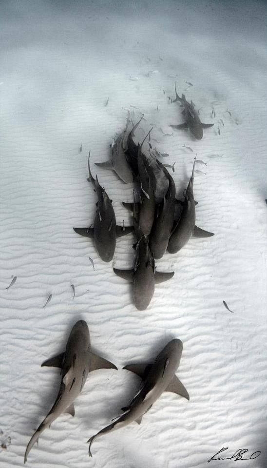 It's a shark meeting on the ocean floor!