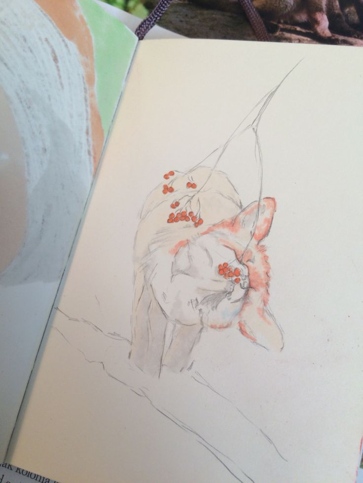 Starting with the fox