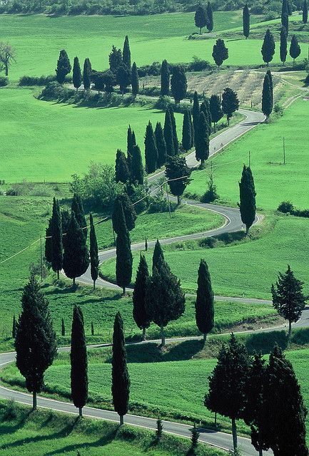 Lush Montechiello, Tuscany. Cypress trees are my all time favorite!!!