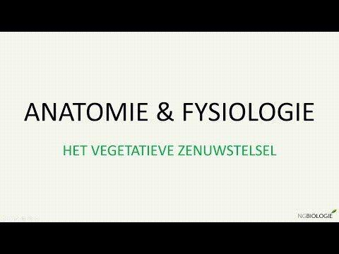 (4) Het vegetatieve zenuwstelsel - YouTube