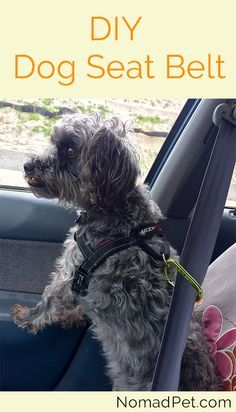 Is it a universal law that all dogs love car rides?  Here's how to make a cheap DIY doggie seatbelt to keep them safe!