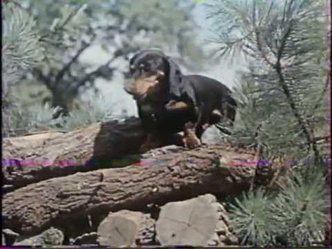 Pletyka délutánja  - Homoki Nagy István ,nagyszerű rövid filmje 1964-ből! :) https://www.youtube.com/watch?v=3oM9KcDWrfA
