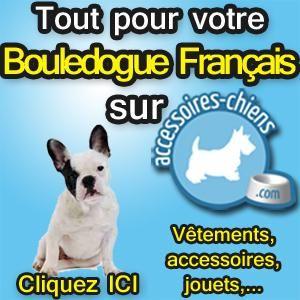vente chiot Bouledogue Francais annonces vente chiot Bouledogue Francais