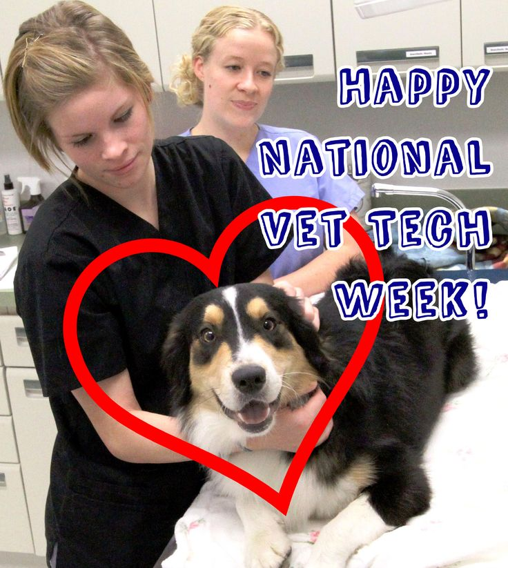 Wishing all our Vet Tech students, present and past, a happy #VetTechWeek! Find out more about our Vet Tech program at www.eicc.edu/vettech - We even have an Open House going on tomorrow!