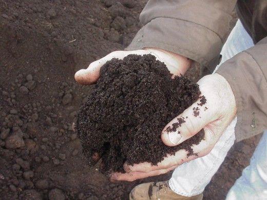 Чернозем на вашем участке. Вермикомпостирование — переработка органических отходов. В отличие от традиционного компостирования, где превращение органики в удобрение происходит в основном под воздействием почвенных микроорганизмов, в вермикомпостировании участвуют еще и дождевые черви.