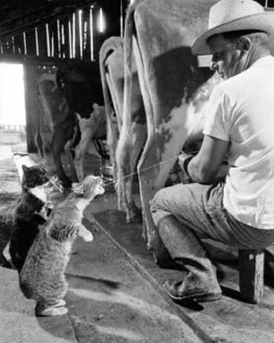 Les chats à la ferme