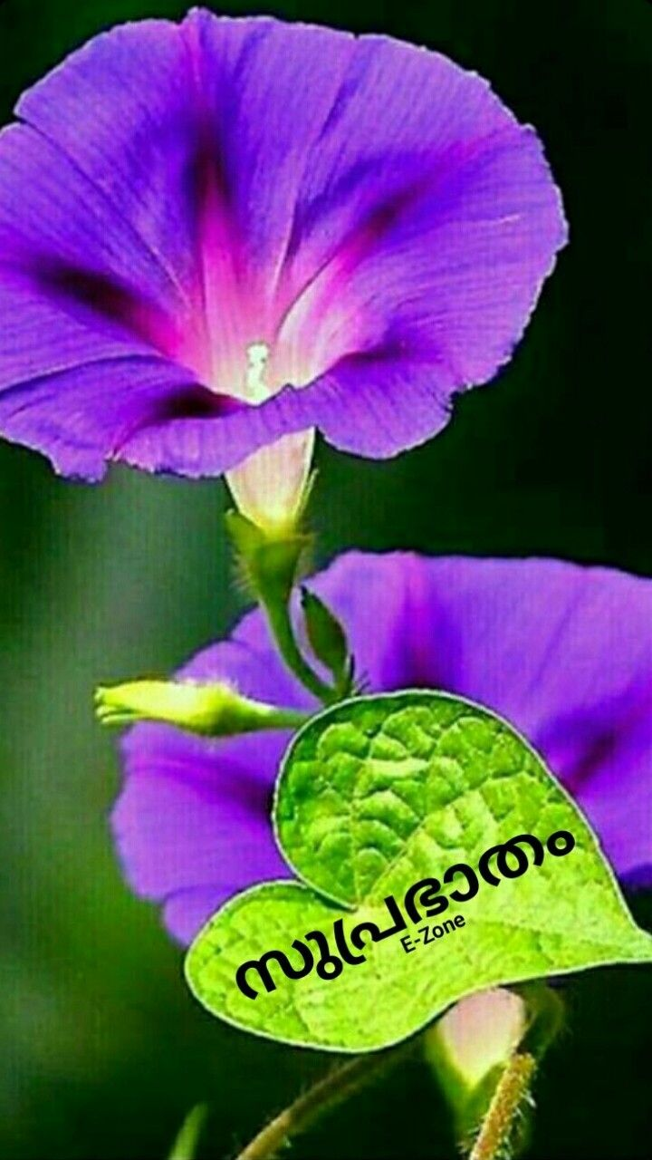 Pin By Eron On Good Morning Malayalam In 2020 Plants Morning Good Morning