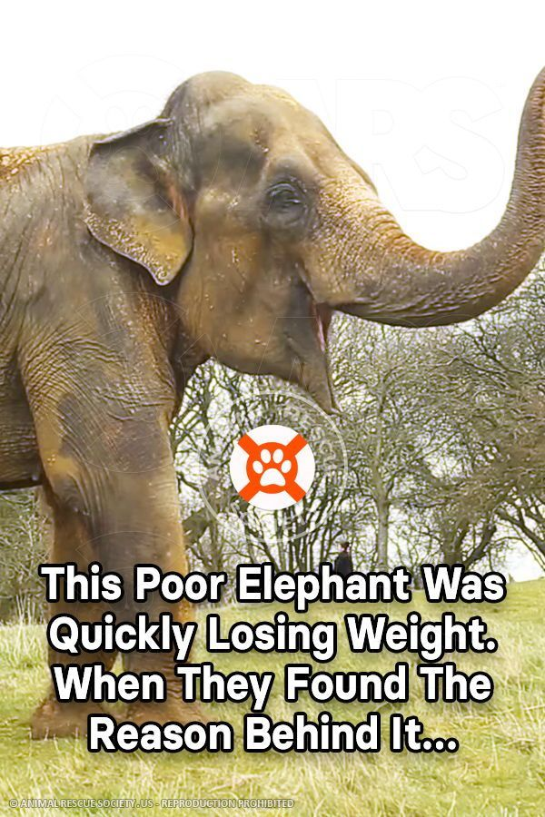 Weight Of An Elephant