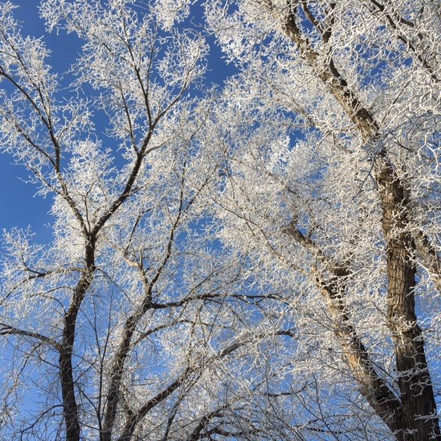 A tangle of frosted branches make a kaleidoscope of intersections in front of a crystal clear winter sky. www.thebestrate.ca