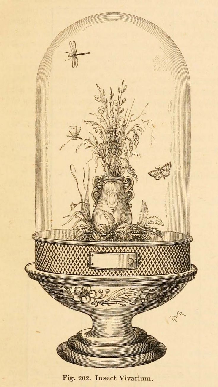 "Vintage Ephemera: Engraved illustration, ""insect vivarium,"" 1866"