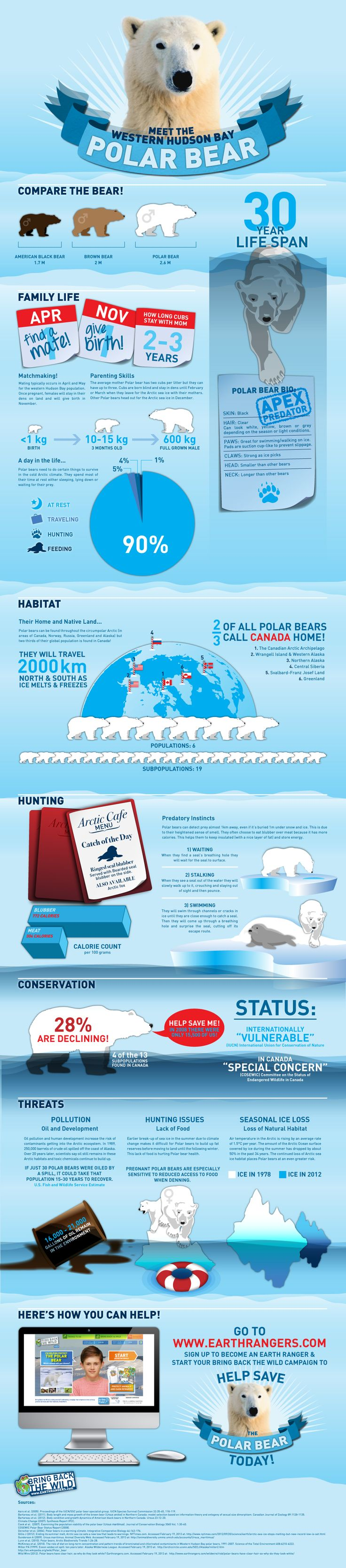 Happy International Polar Bear Day! To celebrate, discover some fun polar bear facts in this infographic and share it with your friends and family