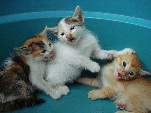 How Many Cats Should You Own Take The Cat Quiz I Got You Need At Least Three Cats Maybe More Kitten Pictures Kittens Cats