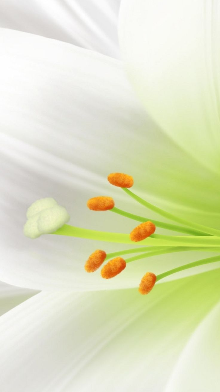 Best 20 white lily flower ideas on pinterest lilies white pure white lily flower macro iphone 6 plus wallpaper dhlflorist Image collections