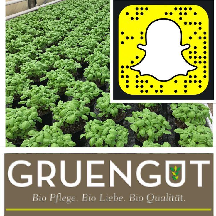 Folgt uns auch bei #snapchat gruengut_bio frische Biokräuter im Social Media 😎#gruengut #bio #öko #natürlich #nachhaltig