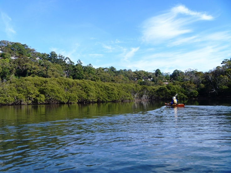 Scotts Creek in the back waters of Sugarloaf Bay - Middle Harbour Sydney