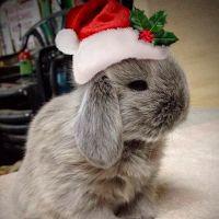 Adorables Imagenes para regalar en #Navidad