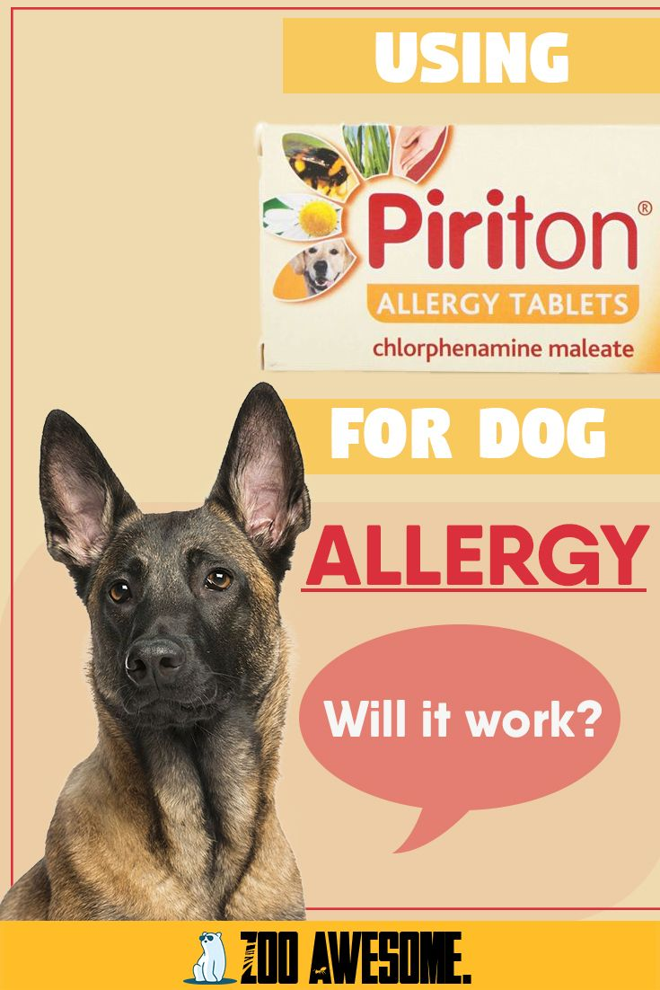 Can i give my dog piriton for allergies in 2020 dog