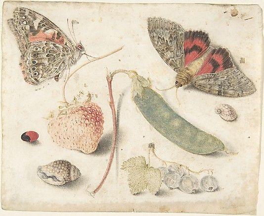 Studies of Fruits, Insects and Shells, Attributed to Georg Flegel  (German, Olomouc (Olmütz) 1566–1638 Frankfurt)