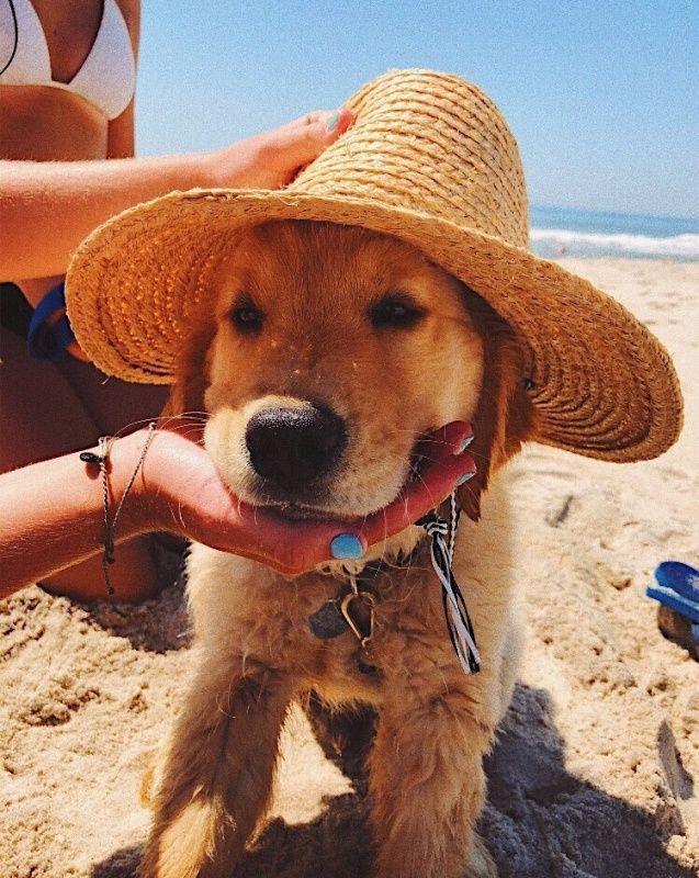Tragen Sie immer einen Hut am Strand! #puppy #cute…