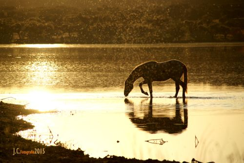 Cavalo, Portugal