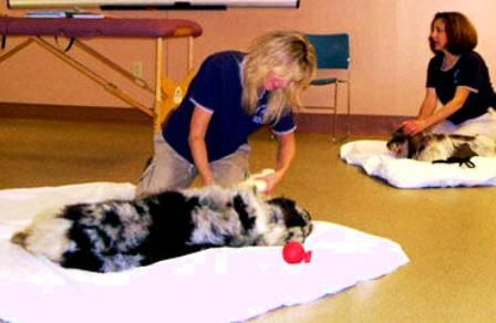 Doggone U - Bancroft School of Animal and Equine Massage Therapy located in Worcester, MA