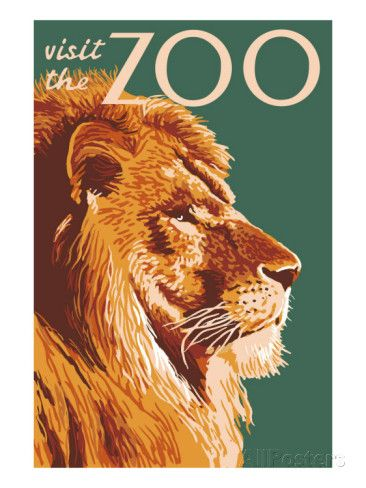 Visit the Zoo, Lion Up Close Posters at AllPosters.com