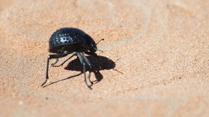 Beetle-Inspired Frost Prevention Technology