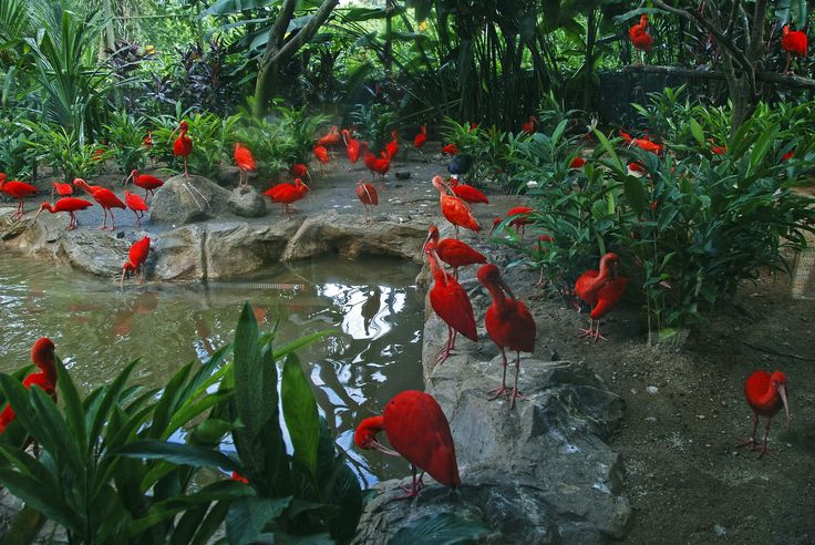 Scarlet ibis. Jurong Bird Park. Singapore Zoo. by Oleg Gudkov on 500px