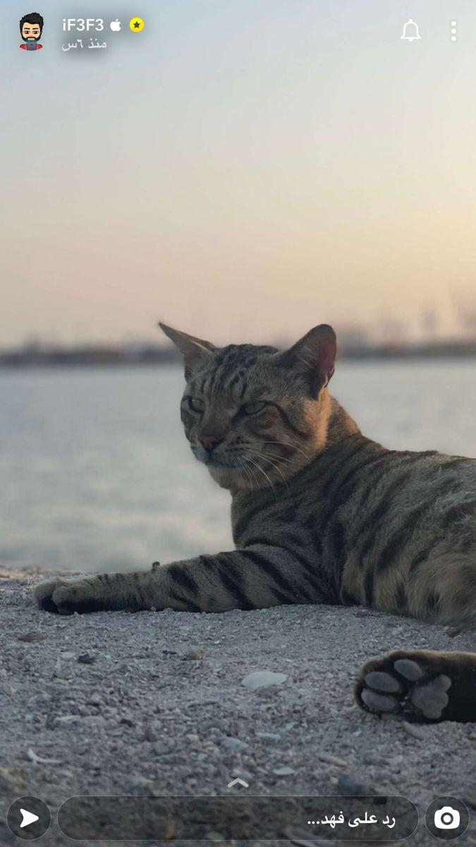 Pin By روابى المطيرى On صور In 2021 Cats Animals
