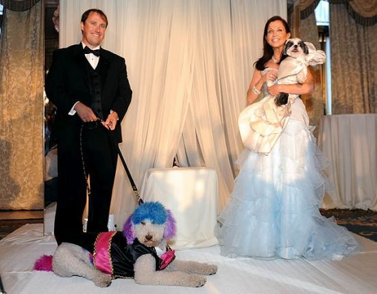 The Most Expensive Pet Wedding In History Cost $250,000