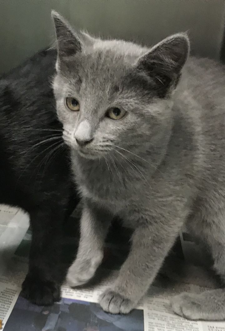 Adopt Lulu Grey Simmon Black On Petfinder In 2020 Cat Adoption Cats And Kittens Saving Cat
