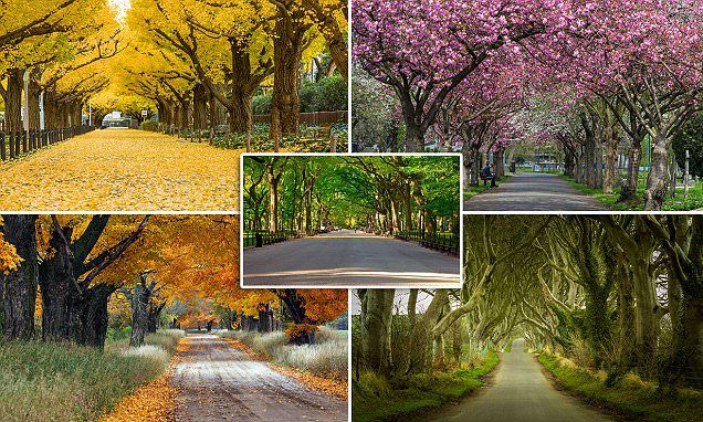 From London to New York: World's most beautiful tree tunnels revealed