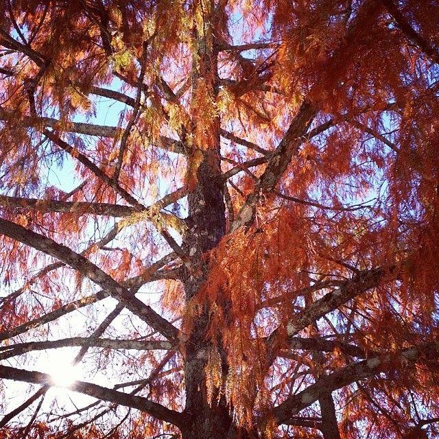 No outono