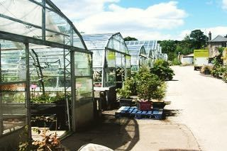 Much of the planting you see around Brighton and Hove starts life here at Stanmer Nursery at Stanmer Park. You can also buy plants! #stanmerhouse #stanmernursery #brightonandhove #proudcountryhouse