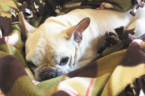 Make your pup a DIY blanket to enjoy the cooler Fall temps!