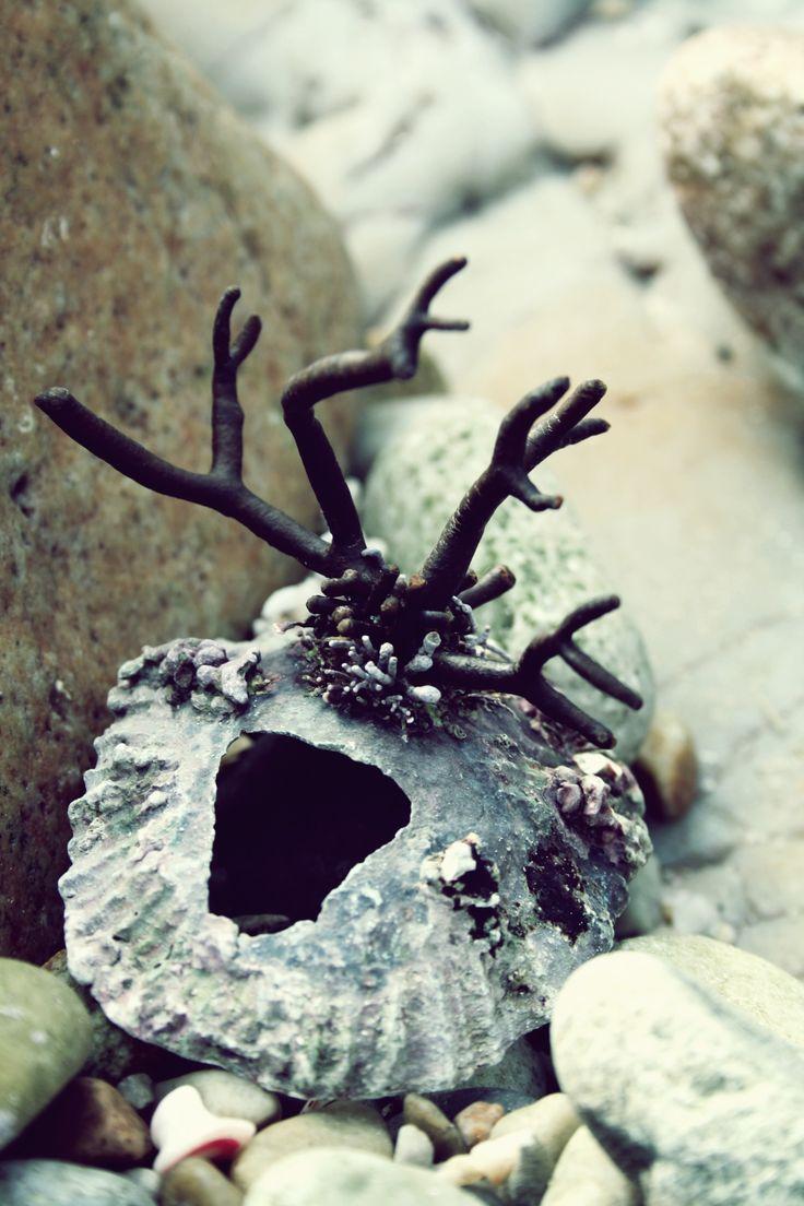 a horny shell ;)