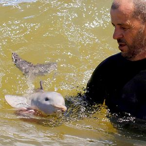 Baby dolphin melts the heart of surfer dude, entire Internet