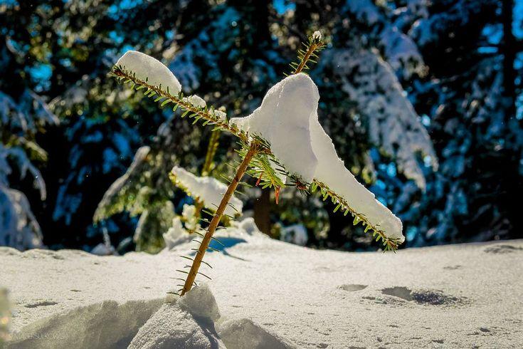 Winter by Maciek Sulkowski