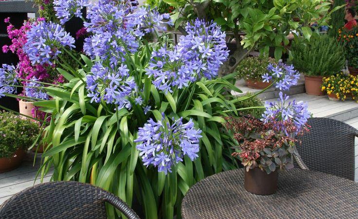 25 sch ne bl hende zimmerpflanzen ideen auf pinterest bl hende sukkulenten orchidee kaktus. Black Bedroom Furniture Sets. Home Design Ideas