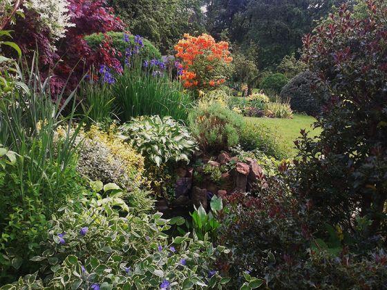 Ogród w górach. - Mój Piękny Ogród dla pasjonatów ogrodnictwa