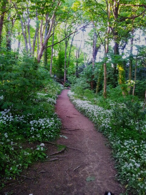 St Helens Woods in Hastings, East Sussex.