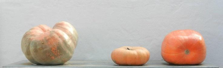#Pumpkins  #Babylonstoren