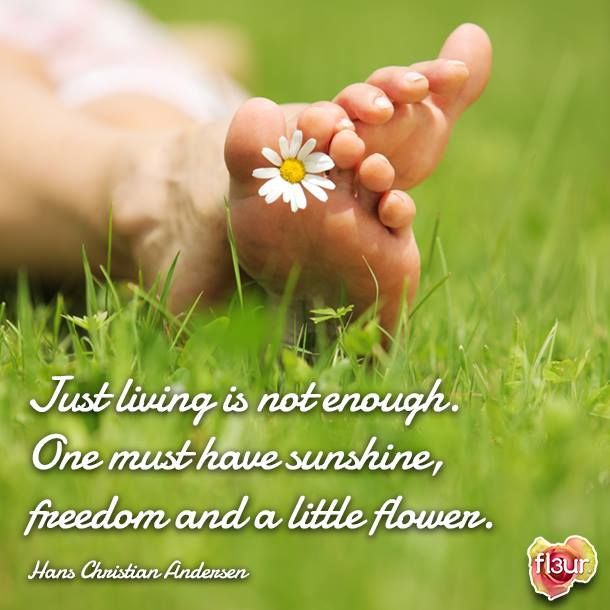 Flower Quotes: Quotes About Flowers Blooming. QuotesGram