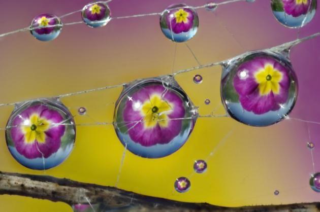 Dew Drops_19