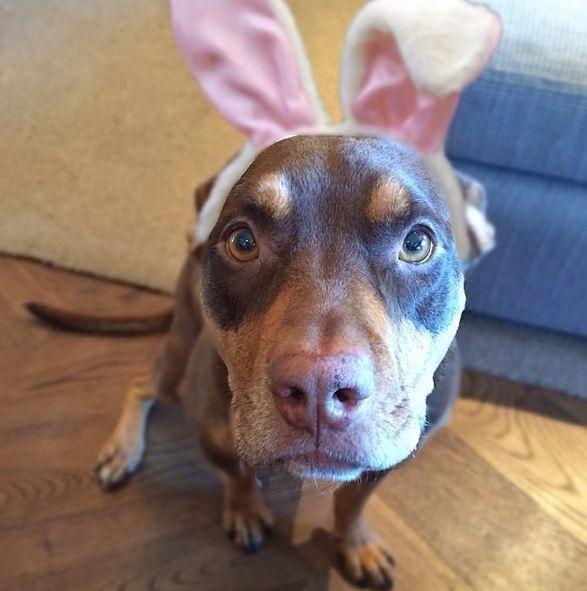 Les stars déguisées en lapin pour Pâques sur Instragam: Via @giseleofficial | Elle Québec
