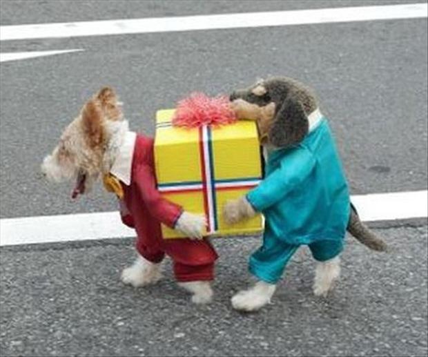 Lief en grappig hondenpak