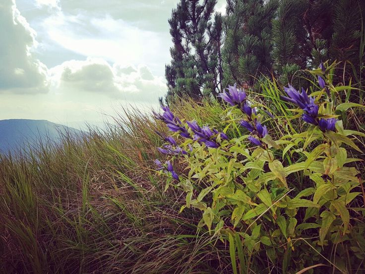 #nature #flowers #mountains
