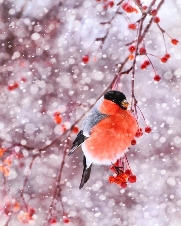 картинки зимние красивые на телефон с рябиной