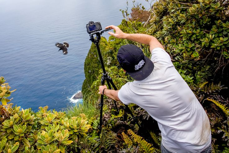 Capturing a currawong above the Razorback | Lord Howe Island