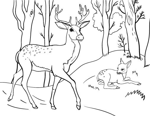 Printable Deer Coloring Page Free PDF Download At